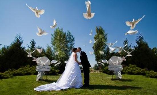 Un volo di colombe bianche